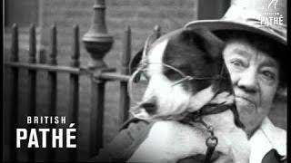 Dog Reprieved (1919)