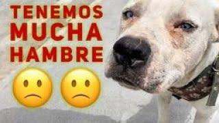 Hay muchos Perros🐕 con HAMBRE y enfermedades,😧 que haremos? Tu que harías? Help Dogs.