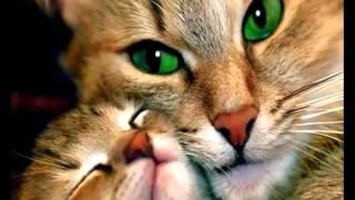 Забавные кошки от РУССКАЯ ПРИРОДА