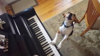 Buddy Mercury Up Close & Personal Singing Beagle Basset Hound Mix!
