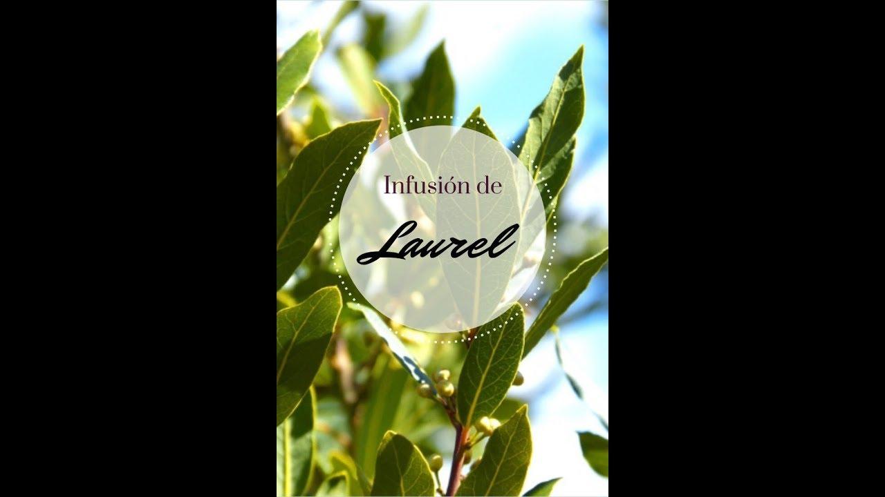 como preparar infusion de laurel
