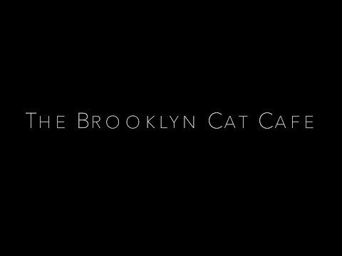 The Brooklyn Cat Cafe Documentary