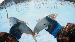ХАПУГИ ТРЕЩАТ ОТ РЫБЫ Зимний лов сига и щуки Зимняя рыбалка на Амуре