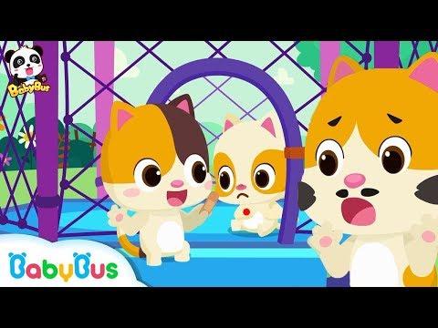 고양이가족 안전송| 승차안전| 놀이터동요|유치원 노래|색깔놀이|지진안전| 베이비버스 동요동화| BabyBus