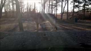 German Shepherd - King Of The Log?