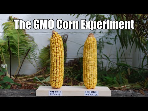 Support the GMO Corn Experiment