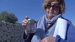 Xylella Fastidiosa a Alacant. El Forcat, Informativos Mediterráneo TV