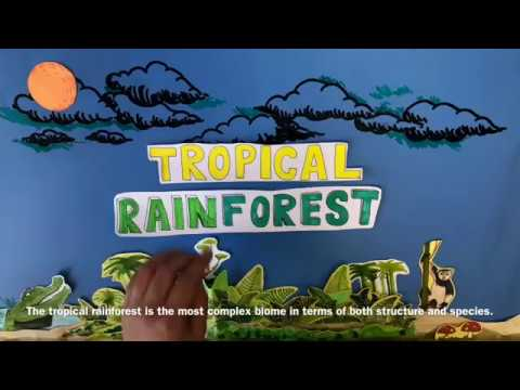 Rainforest Ecosystems - Plant And Animal Adaptations (Student Made)