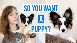 Top 5 Things I Wish I Knew Before Getting a Puppy // Percy The Papillon Dog