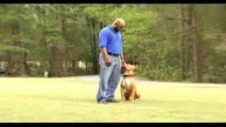 Protection Dog/obedience Demonstration