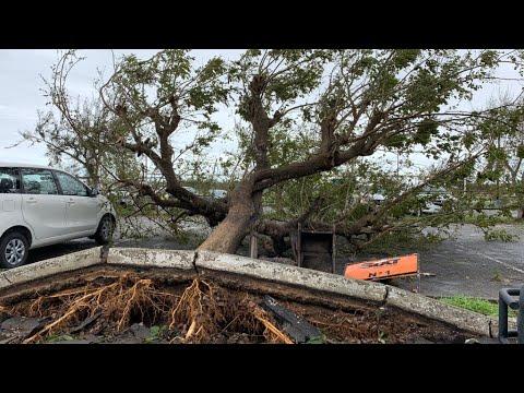 Cyclone Idai: Over 1,000 feared dead in Mozambique