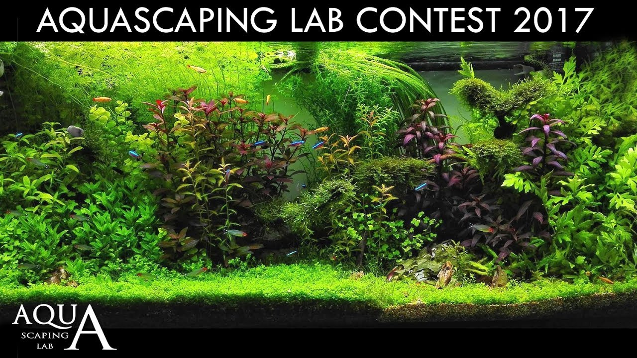 Aquascaping Contest 2017 Ranking And Winner 2 Aquascaping Lab Contest Classifica E Vincitore Youtube