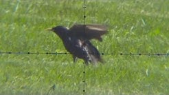 Can a Bird feel a Broken Wing? [WARNING: Pest Control]