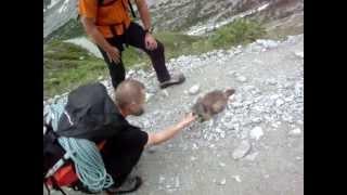 Marmotte, vers le glacier blanc