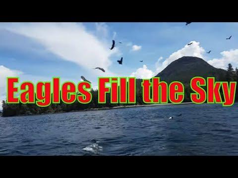 Eagles in Ketchikan
