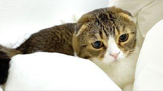 🐈猫が飼い主の羽毛布団を離してくれなくて困ってます…