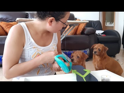 GUILTY  DOG /MUST WATCH 😱😂😂 HOW SHE REACTED😱