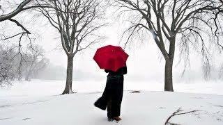 冬燕 / 若山かずさ Cover:山口えい子