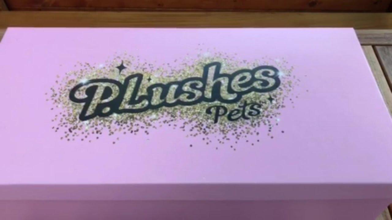 New P.Lushes Pets Fashionable Plushies! #shorts