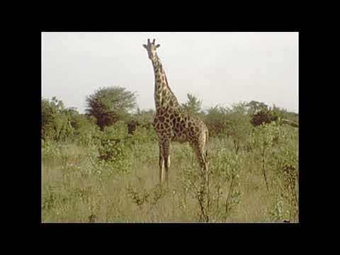 1978 Hwange National Park - African Animals - Reel #59