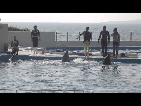 K & K 2013 Okinawa Dolphin Show 2