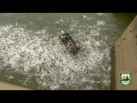 """شاهد:""""الصيد الكهربائي""""طريقة جديدة لصيد الأسماك بأمريكا"""