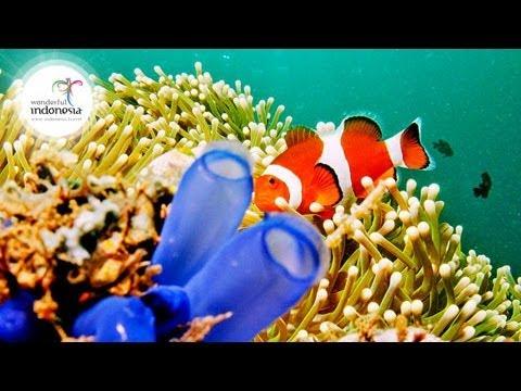 Wonderful Indonesia   Manado – Bunaken National Park