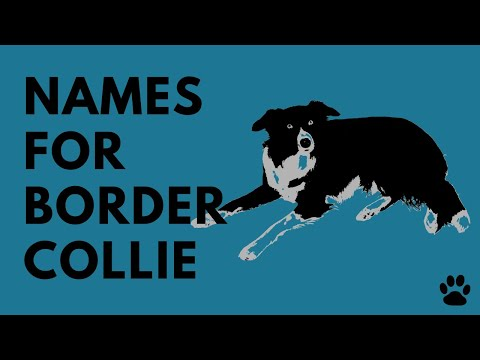 Border Collie Names -  43 TOP Ideas | Names