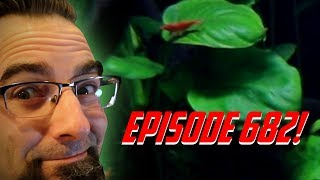 Episode 682! Wednesday so Let's talk what it takes after a rescape! thumbnail