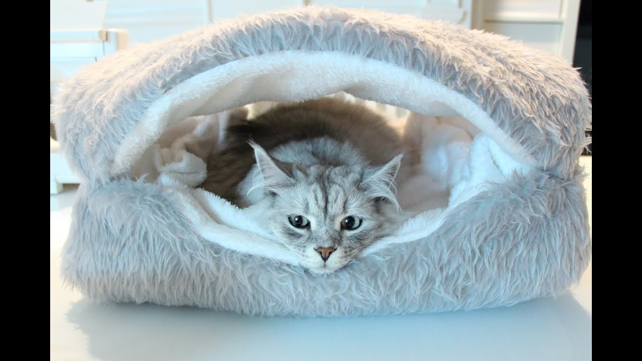 siberian status update: clamshell bed - youtube