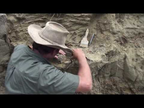 Fossil hunting with PaleoAdventures - in the quarry at last!