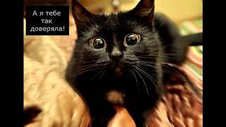 Коты достойные Оскара – Лучшие фото приколы с котами – Смешные кошки МатроскинТВ