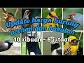 Harga Burung Bakalan Dan Ocehan Termurah Di Indonesia  Mp3 - Mp4 Download