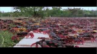 Meshuggah - Swarm (Fan-made Music Video) HD