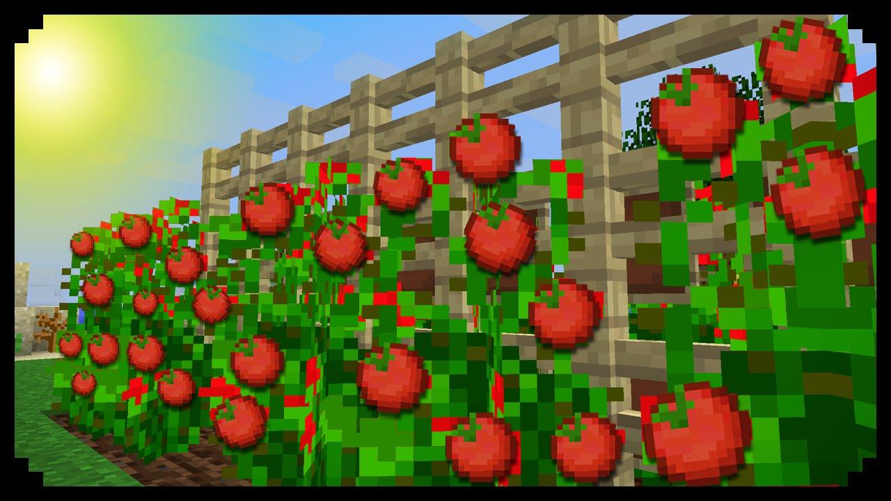 ✔ Minecraft: How to make Tomato Plants