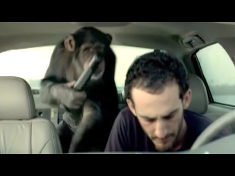 funniest-trunk-monkey-commercials