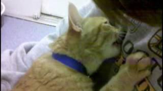 Sammy The Breastfeeding Cat