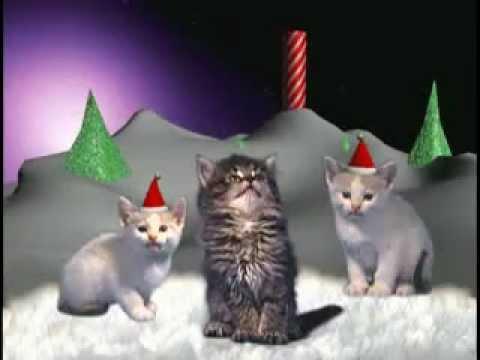 Cat song miauw