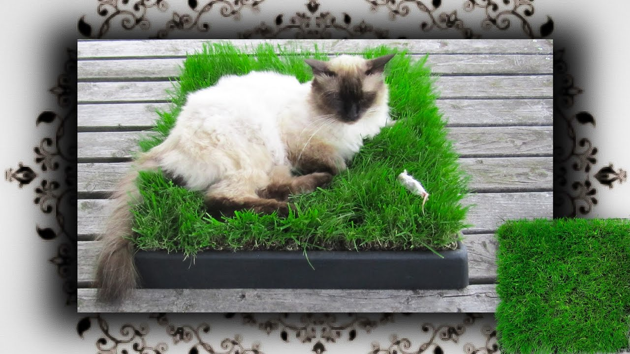 diy chill out zone aus gras f r katzen cat grass place youtube. Black Bedroom Furniture Sets. Home Design Ideas