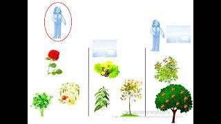Культурные и дикие растения - Сайт-игра Разумейкин