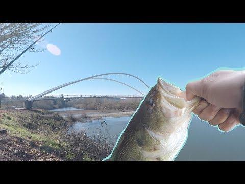 Down Town Salem Bass Fishing - Willamette River