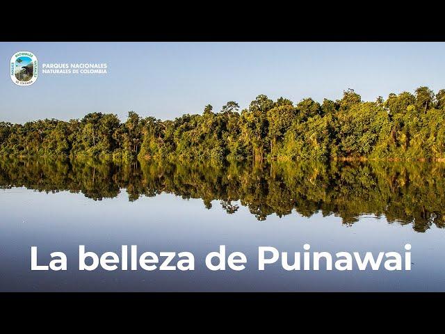 La Reserva Nacional Natural Puinawai, cuna de los pueblos Puinave y Curripaco