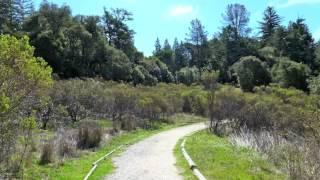 Skyline Ridge Open Space Preserve - Alpine Pond