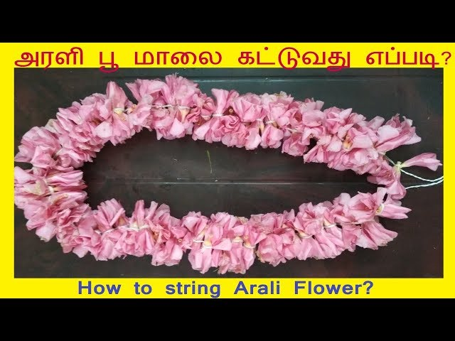 Arali poo malai /???? ?? ???? ????????? ?????? ? How to string arali flower garland ?