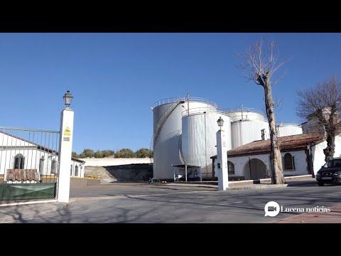 VÍDEO: Los depósitos del Patrimonio Comunal Olivarero cubren el 75% de su capacidad en dos meses