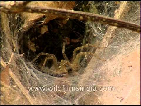A spider in its web