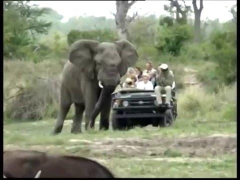 สารคดีส่องโลก ตอน บทเรียนจากช้าง