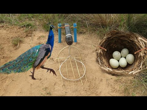 Easy Bird Trap Using Microphone and Bird Nest