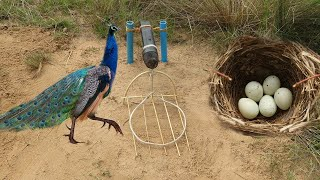 Easy Bird Trap Using Microphone and...