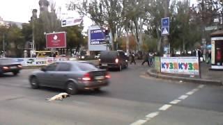 Николаев ссора водителей из-за собаки